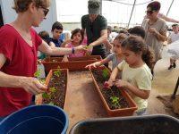 New Greenhouse - Kfar Blum